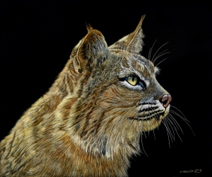 Wildcat Series: Bobcat