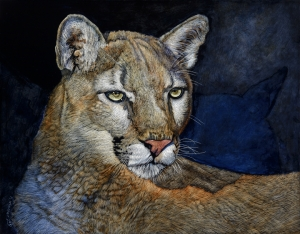 Wildcat Series: Shadows & Light (Cougar)