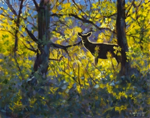 Mule Deer Doe, Late Day Backlight